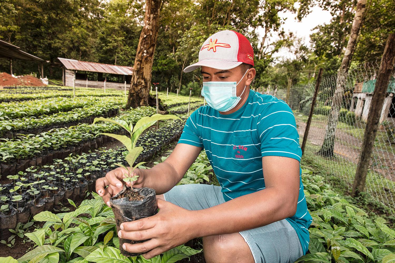 150 mil plantones de café para el Canal - El Faro