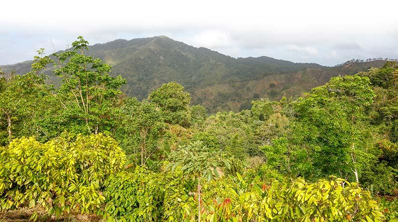 Un programa ambiental que cambia vidas - El Faro - Canal de Panamá